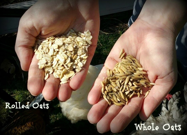 whole vs rolled oat